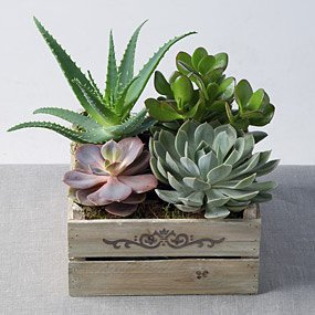 house plants online