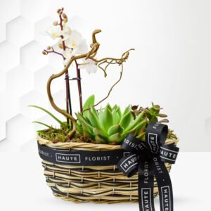 Orchid and Succulents