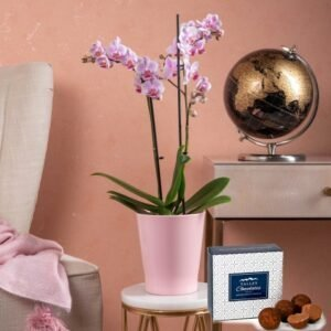 Phalaenopsis Orchids - Orchid Plants - Indoor Plants - Houseplants - Plant Gifts - Plant Gift Delivery