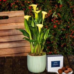 Spring Calla Lily - Free Chocs