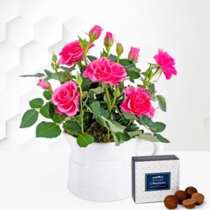 Spring Rose Jug - Rose Plants - Indoor Rose Plants - Indoor Plants - Plant Delivery - Houseplants - Home Plants