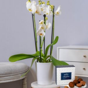 White Phalaenopsis Orchid - Orchid Plants - Orchid Delivery - Indoor Plants - Plant Delivery - Houseplants